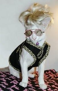 Elton Cat