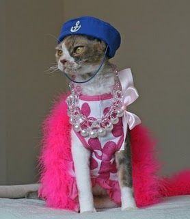 Village People's Cat